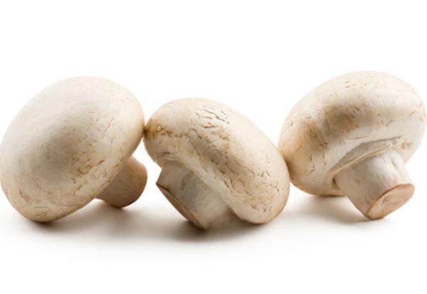 cogumelo-champignon-conteudo_17218_39816