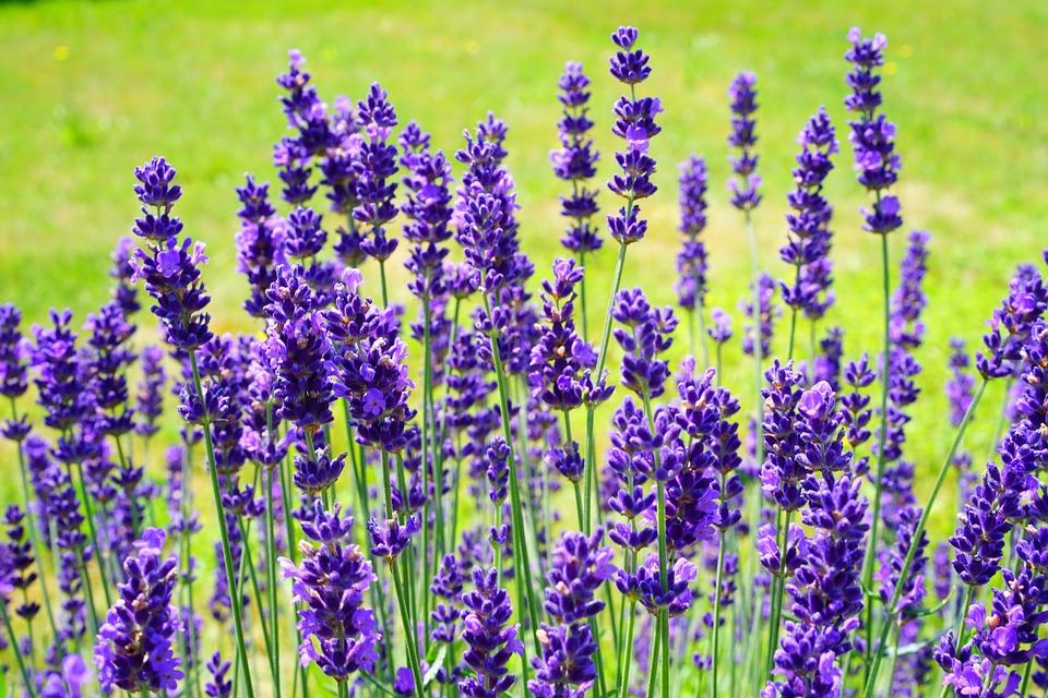 Conheça 12 Plantas que Afastam Insetos Indesejados