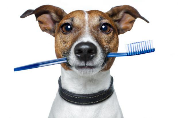 Problemas Dentários Comuns em Cães