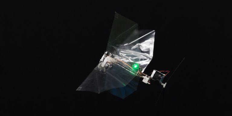 Robô Ajuda a Descobrir os Segredos Voadores das Moscas da Fruta